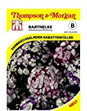 Bartnelke Kaleidoscope Mixed