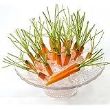 Paleo 30pcs tipo mini semillas de zanahoria dedo pulgar rábano