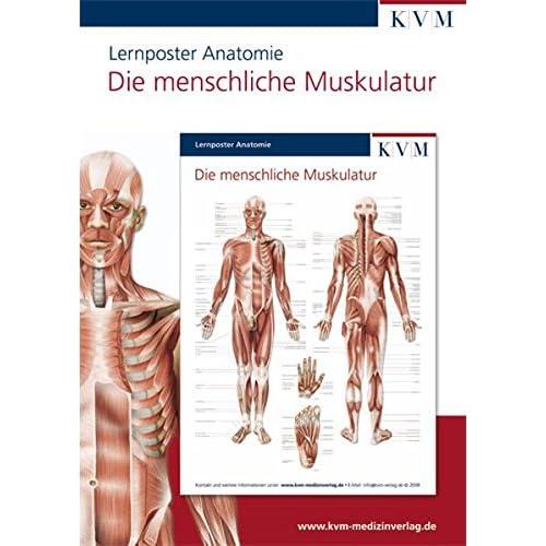 PDF] Anatomie Lernposter: Die menschliche Muskulatur KOSTENLOS ...