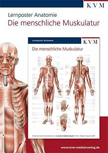Anatomie Lernposter: Die menschliche Muskulatur