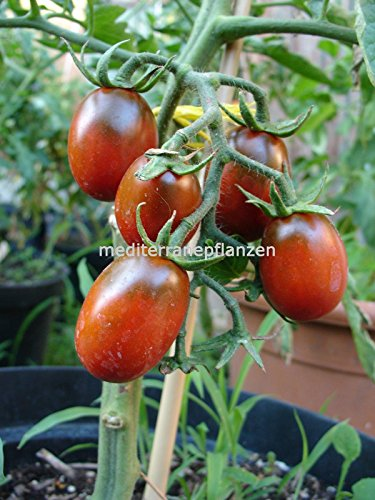 Hungarian Historical Tomato \