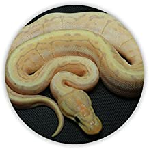Mdf Material Men Have Snake For Circle Tag Dropproof