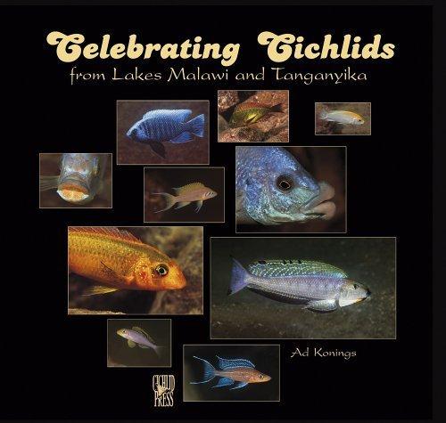 Celebrating Cichlids from Lakes Malawi and Tanganyika by Ad Konings (2005-08-31)