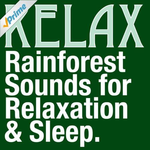Rainforest Sounds for Relaxation, Meditation & Sleep