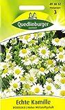 Echte Kamille, Matricaria chamomilla, Samen für ca. 4 lfm.