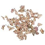 Rayher Hobby 34243000 Rosenblütenblätter, hell, 5g, getrocknet, duftintensive, aromatische Deko, Blütenmischungen, ideal zum Einarbeiten in Badekugeln, Knetseife und Badesalz, Echtblüten