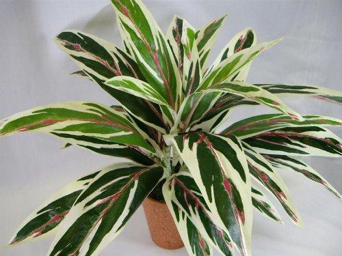 46cm-potted-artificial-silk-dracaena-bush-plant-house-plant