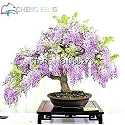 Shopmeeko 10 Stück Glyzinien Pflanzen Schöne Bonsai Für DIY Hausgarten Echte und frische Blumen Pflanzen Glyzinien Sinensis Baum DIY Plant Sement: Grün
