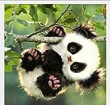 YANZUAN 5D Pintura diamante Bricolaje Pequeño panda Dormitorio sala de estar Decoración del hogar El cubo de rubik 40x30cm Taladro de diamante completo Sin marco