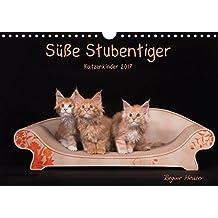 Süße Stubentiger - Katzenkinder (Wandkalender 2017 DIN A4 quer): Katzenkinder 2017 (Monatskalender, 14 Seiten ) (CALVENDO Tiere)