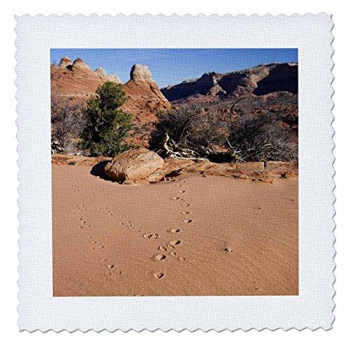 3dRose QS 87929_ 3Animal Tracks, Coyote Buttes, Arizona und Utah-US03jgs0000-Jim Goldstein, Quilt, Platz, 8von 20,3cm -