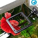 AQUAMARINE Fish Feeding Ring Square Floating Food Feeder Circle with Suction Cup 1 Piece Color May Vary