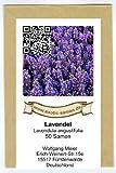 Lavendel - Lavendula angustifolia (200 Samen)