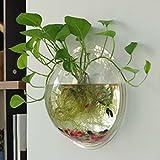 Tinksky Wand Fish Tank Wand hängenden Clear Glas Vase Blume Pflanze Topf Aquarium Bowl-Startseite-Dekoration 23cm …