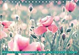 Mohnblumen - Fotografie mit Magie (Tischkalender 2019 DIN A5 quer): Ein Wandkalender mit wunderschönen Fotokunst-Bildern der Mohnblume (Monatskalender, 14 Seiten ) (CALVENDO Natur)