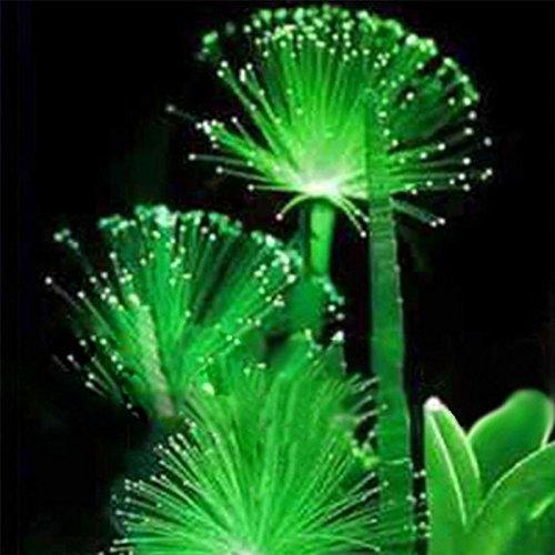 Rosepoem 100Pcs Smaragd-Leuchtstoffblumensamen-einfache Sorgfalt, die mehrjährige Hauptanlagen pflanzt