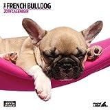 Magnet & Stahl 22.844,8cm Französische Bulldogge Modern