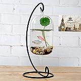 Decorativo de cristal transparente para colgar Air terrario planta pecera con soporte de metal soporte