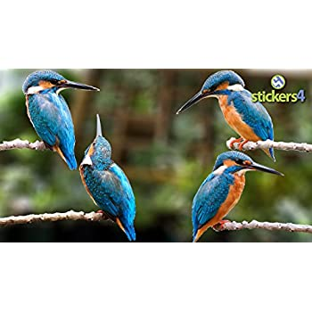 Set of 4 photorealistic double sided kingfisher window cling stickers