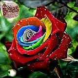 Sisaki 100PCS Graine de Rose Rosier Graines Roses Jardin Multicolor Graines rares