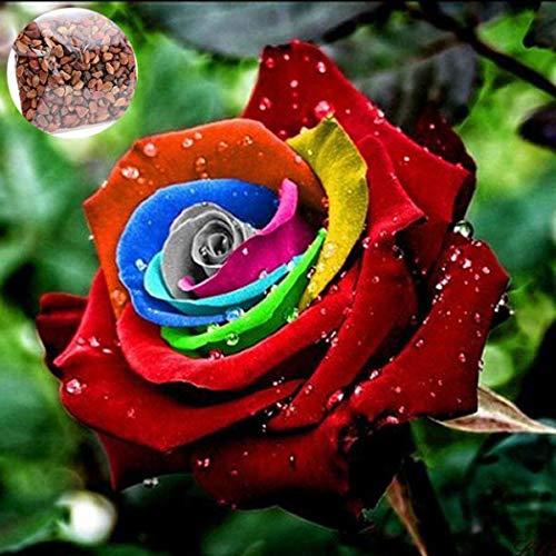 timesok garden,semi di rose rari perenni bonsai multicolore rose sementi ornamentali semi di piante per casa, balcone, giardino, cortile