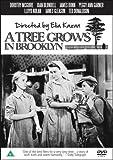 A Tree Grows In Brooklyn [DVD] (1945)