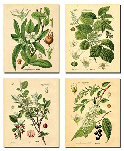 Popular Old-Fashioned Plant Botanical Prints; Four 8x10in Poster Prints by Gango Home Decor
