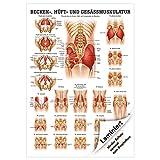 Gesäss, Hüfte u. Beckenmuskulatur Mini-Poster Anatomie 34x24 cm med. Lehrmittel