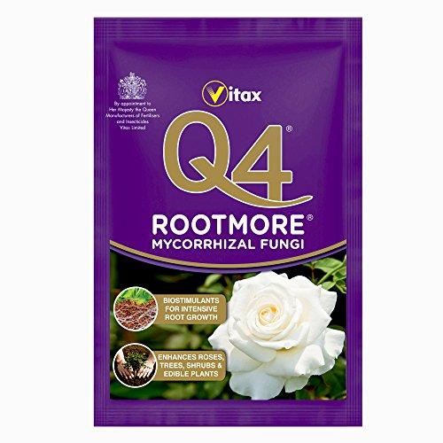 Q4 Champignons mycorhiziens Rootmore, Sachet de 60 g