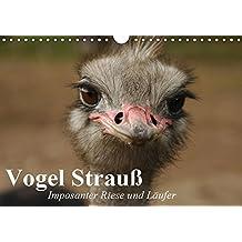 Suchergebnis Auf Amazonde Für Vogel Strauß Kalender Bücher