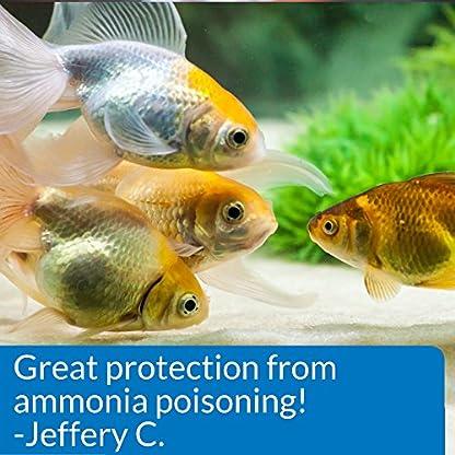 API AMMO-LOCK Freshwater and Saltwater Aquarium Ammonia Detoxifier 473 ml Bottle 6