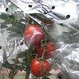 NOOR 090TOMATENH Tomatenhaube gelocht 20 my für 10 Tomaten, 0,65 x 10 m