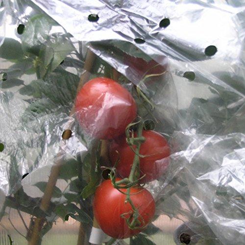 Noor 090tomatenh Housse à tomates perforées 20 my pour 10 tomates, 0,65 x 10 m
