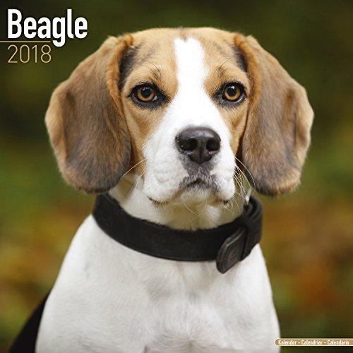 Beagle Calendar 2018 (Square) (Beagle-kalender)