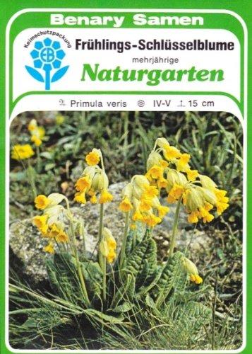 Frühlings Schlüsselblume, Primula veris, ca. 80 Samen