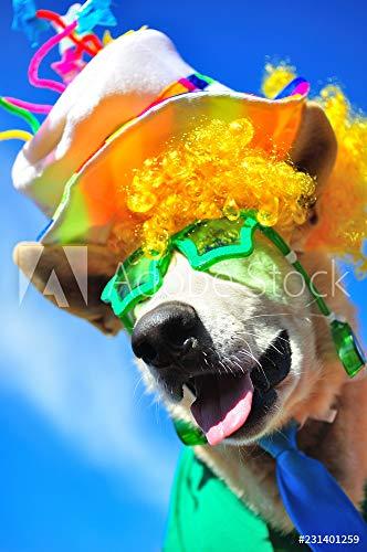 otiv: Funny Party Dog #231401259 - Bild auf Forex-Platte - 3:2-60 x 40 cm / 40 x 60 cm ()