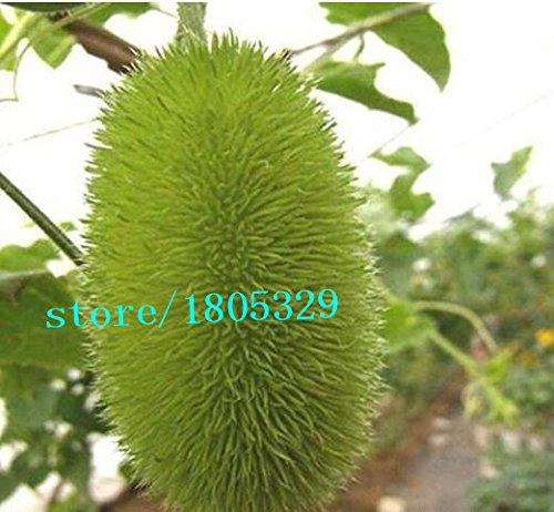 50pcs / sac fruits d'ornement graines de concombre de légumes, petit concombre mignon,