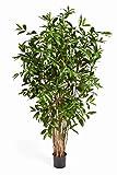 artplants - Dracaena Surculosa Artificial, en Maceta, 1150 Hojas, Verde, 180 cm - Planta de drácena/Árbol Decorativo