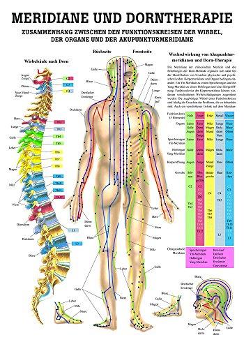 Ruediger Anatomie PO44 Meridiane und Dorntherapie Tafel, 50 cm x 70 cm