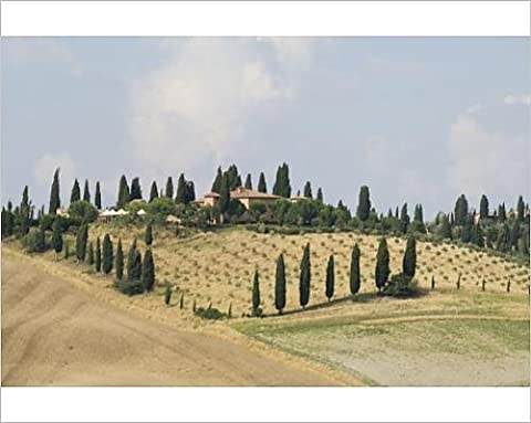 Photographic Print of Typical view of the Tuscan landscape