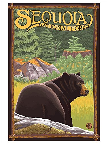 Bear In Forest Sequoia National Forest, Ca (Playing Card Deck 52 Card Poker Size With Jokers)