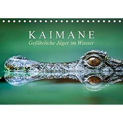 Gefährliche Jäger im Wasser: Kaimane (Tischkalender 2014 DIN A5 quer): Lebende Fossilien (Tischkalender, 14 Seiten)