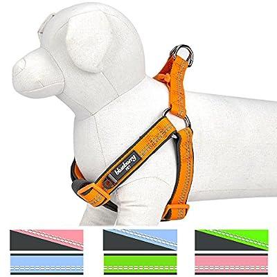 Blueberry Pet Step-In Geschirre 3M Reflektierendes Neopren Gepolstertes Hundegeschirr, Passender Hundehalsband erhältlich separate