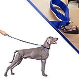 Verstellbare Hundeleine mit Halsband. Set aus Hundehalsband und Leine. Halsband für große und mittelgroße Hunde. Autosicherheitsgurte für Hunde, sehr haltbar. 3 Farben