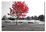 Berger Designs - Wandbild auf Leinwand als Kunstdruck in verschiedenen Größen. Schwarz Weiss Naturbild mit rote Blätter Kontrast. Beste Qualität aus Deutschland (90 x 70 cm BxH)