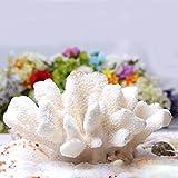Descripción:   Tipo de artículo: Coral blanco   Tamaño: 12-15cm   Nota: El crecimiento natural, cada uno no puede ser exactamente el mismo, es inevitable que los pequeños defectos sean normales.   Material: Coral   Características   - Material respe...