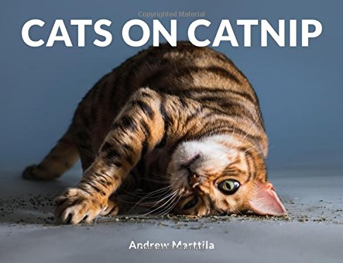 Cats on Catnip por Andrew Marttila