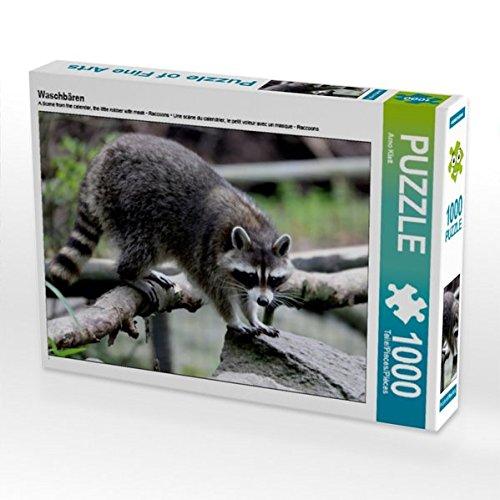 Waschbären 1000 Teile Puzzle quer (CALVENDO Tiere) (Waschbär Maske)
