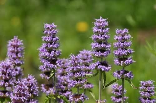 AGROBITS Belle de Jour variée: illard Nombreuses graines a semer de Fleurs...