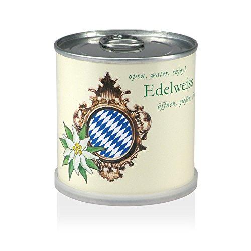 extragifts-fiori-in-lattina-stella-alpina-bavaria